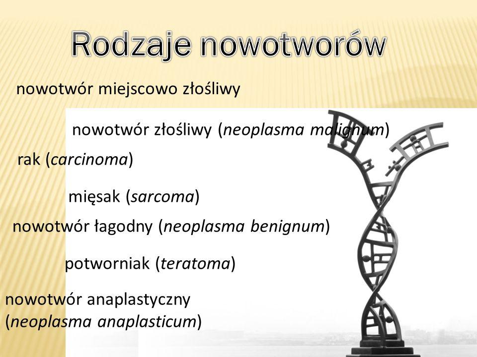 nowotwór łagodny (neoplasma benignum) nowotwór złośliwy (neoplasma malignum) nowotwór anaplastyczny (neoplasma anaplasticum) mięsak (sarcoma) rak (car
