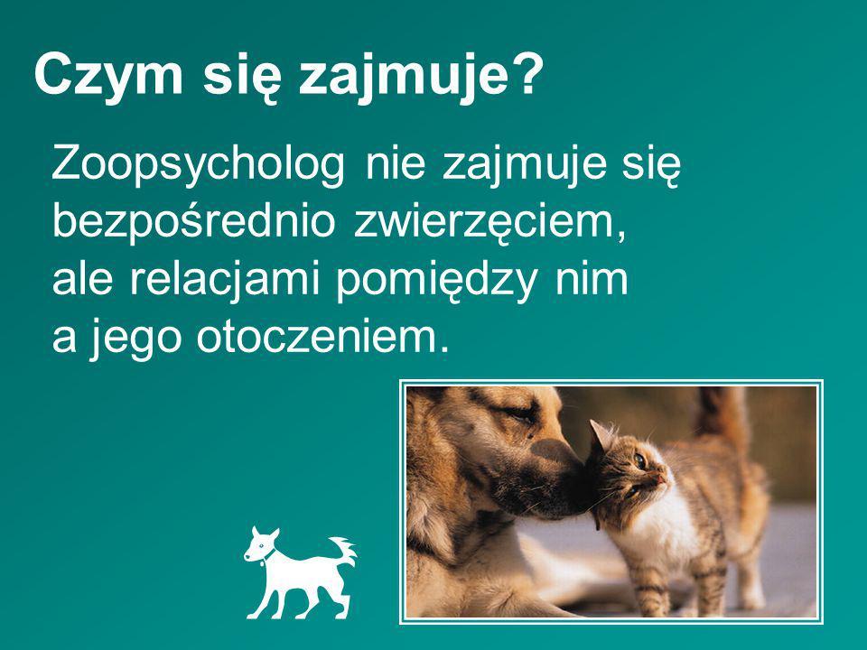 Czym się zajmuje? Zoopsycholog nie zajmuje się bezpośrednio zwierzęciem, ale relacjami pomiędzy nim a jego otoczeniem.