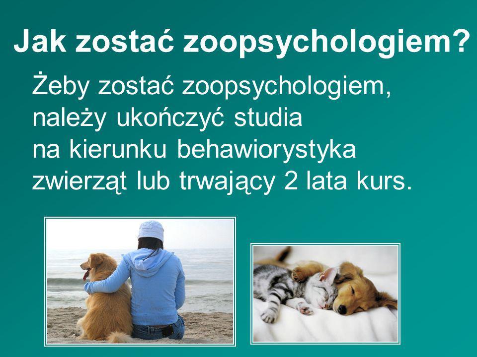 Jak zostać zoopsychologiem? Żeby zostać zoopsychologiem, należy ukończyć studia na kierunku behawiorystyka zwierząt lub trwający 2 lata kurs.