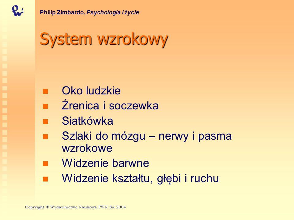 System wzrokowy Oko ludzkie Źrenica i soczewka Siatkówka Szlaki do mózgu – nerwy i pasma wzrokowe Widzenie barwne Widzenie kształtu, głębi i ruchu Phi