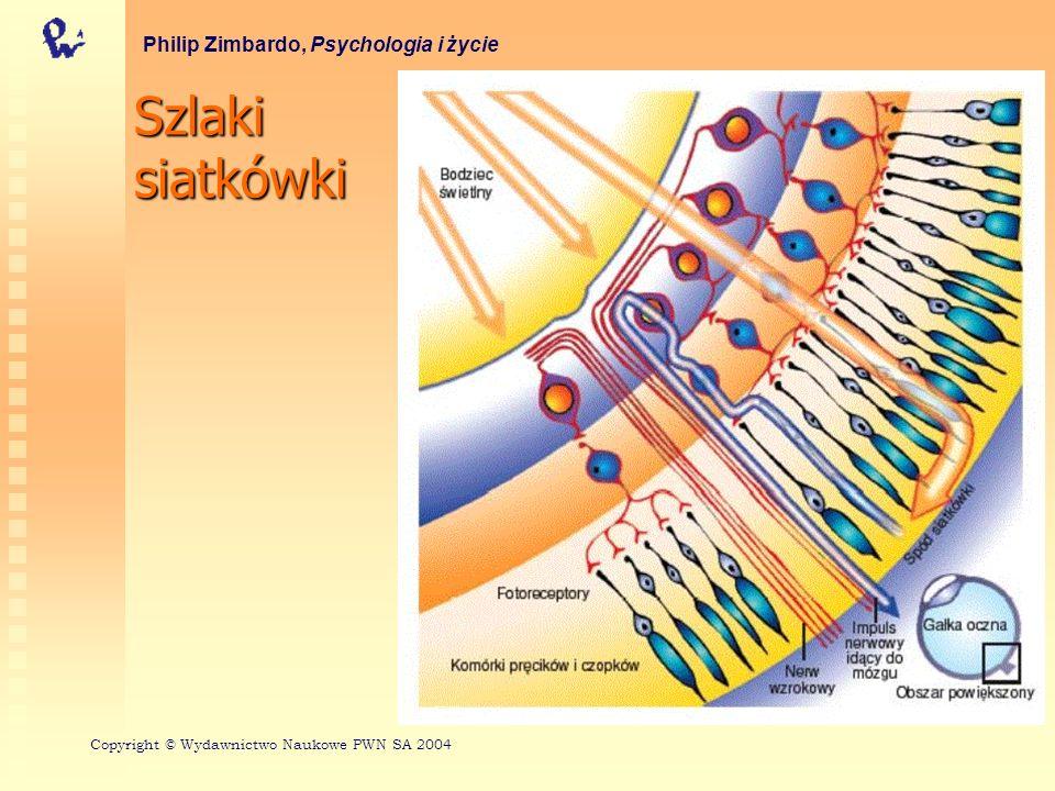 Szlaki siatkówki Philip Zimbardo, Psychologia i życie Copyright © Wydawnictwo Naukowe PWN SA 2004