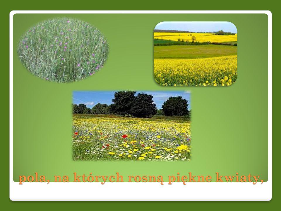 pola, na których rosną piękne kwiaty,