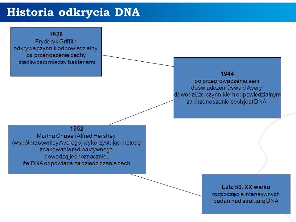 Historia odkrycia DNA 3 1944 po przeprowadzeniu serii doświadczeń Oswald Avery dowodzi, że czynnikiem odpowiedzialnym za przenoszenie cech jest DNA 19