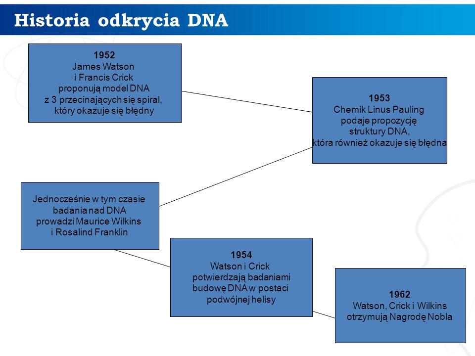 Historia odkrycia DNA 4 1953 Chemik Linus Pauling podaje propozycję struktury DNA, która również okazuje się błędna 1952 James Watson i Francis Crick