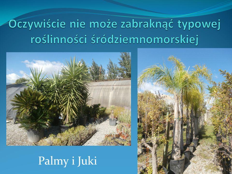 Palmy i Juki