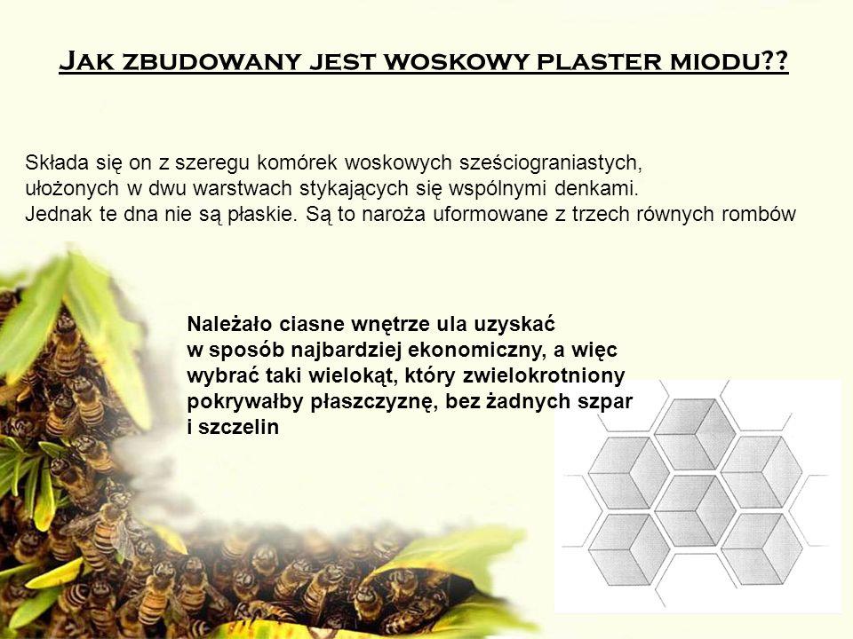 Jak zbudowany jest woskowy plaster miodu?? Składa się on z szeregu komórek woskowych sześciograniastych, ułożonych w dwu warstwach stykających się wsp