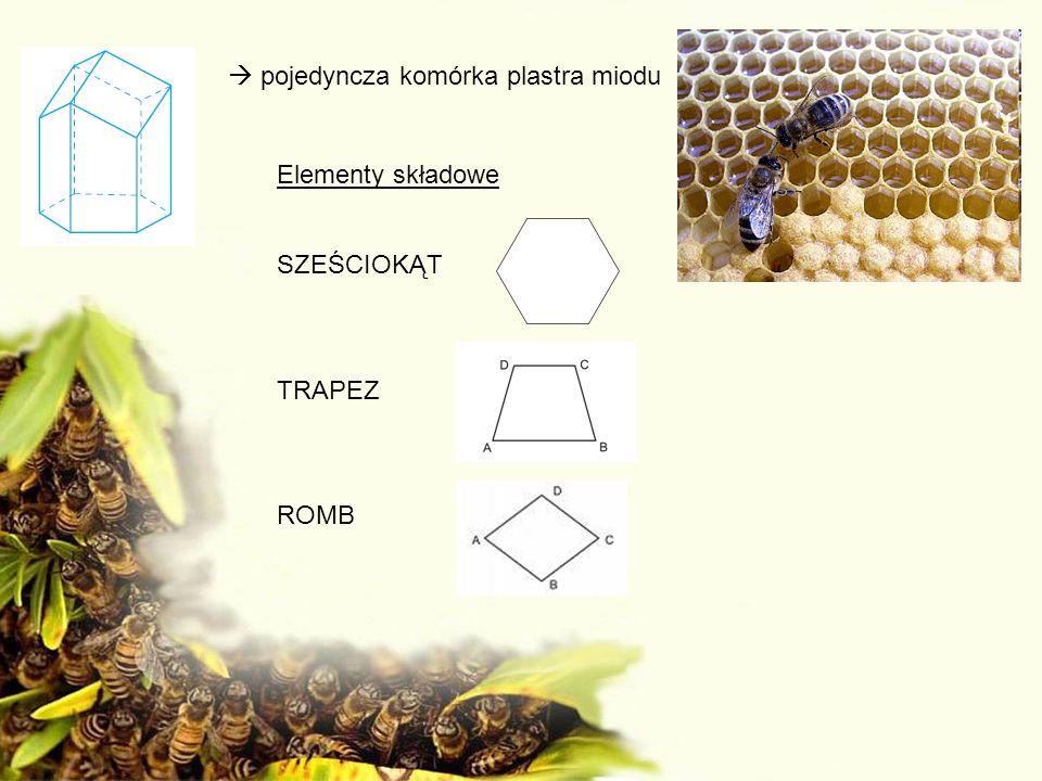 pojedyncza komórka plastra miodu Elementy składowe SZEŚCIOKĄT TRAPEZ ROMB