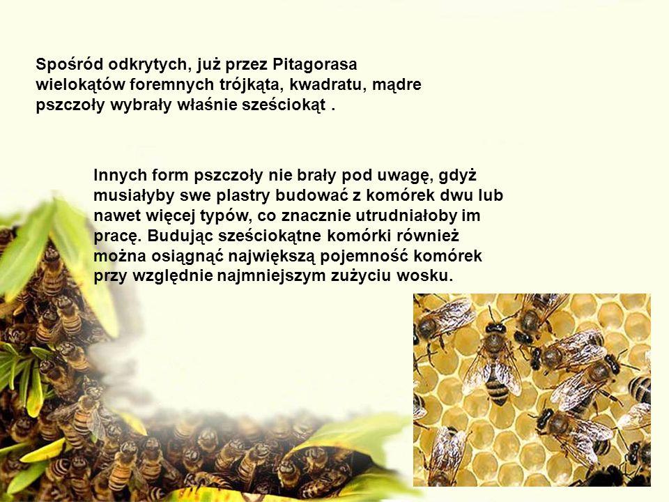 Spośród odkrytych, już przez Pitagorasa wielokątów foremnych trójkąta, kwadratu, mądre pszczoły wybrały właśnie sześciokąt. Innych form pszczoły nie b