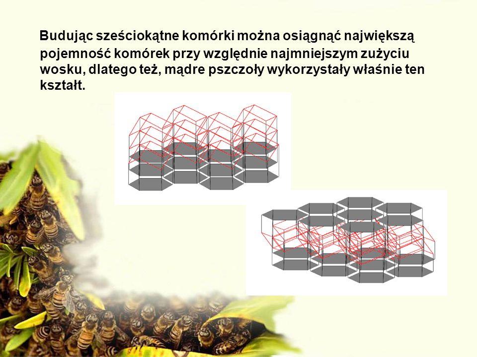 Budując sześciokątne komórki można osiągnąć największą pojemność komórek przy względnie najmniejszym zużyciu wosku, dlatego też, mądre pszczoły wykorz