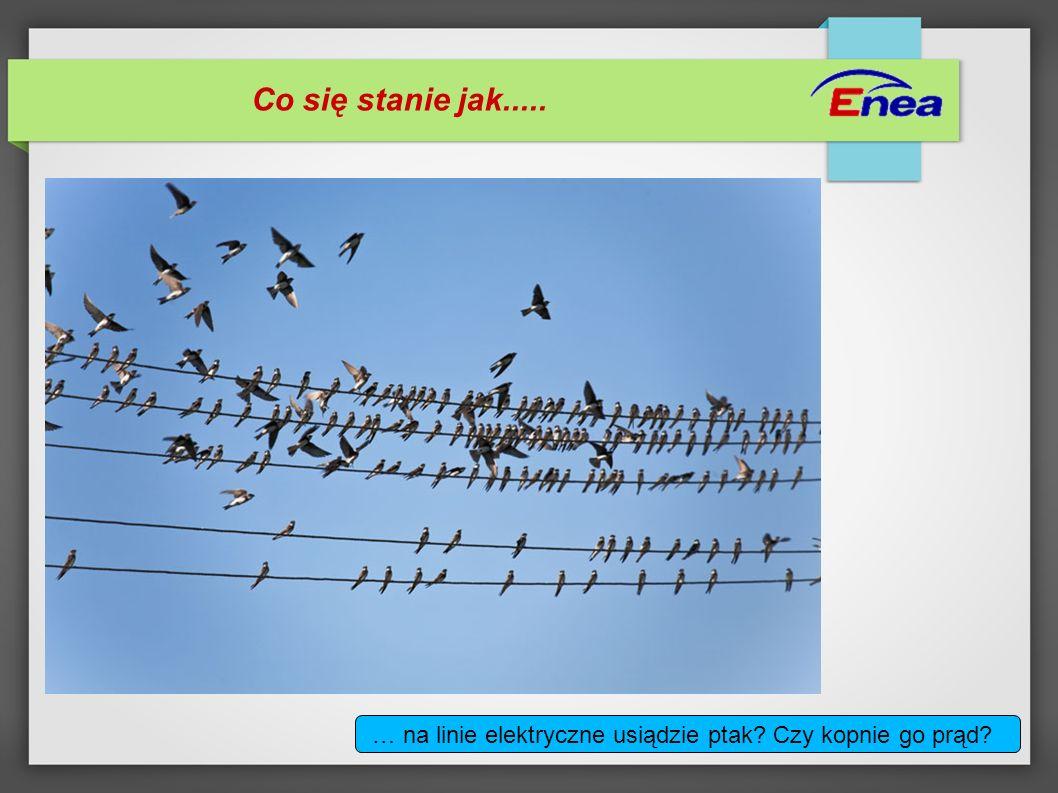 Co się stanie jak..... … na linie elektryczne usiądzie ptak? Czy kopnie go prąd?