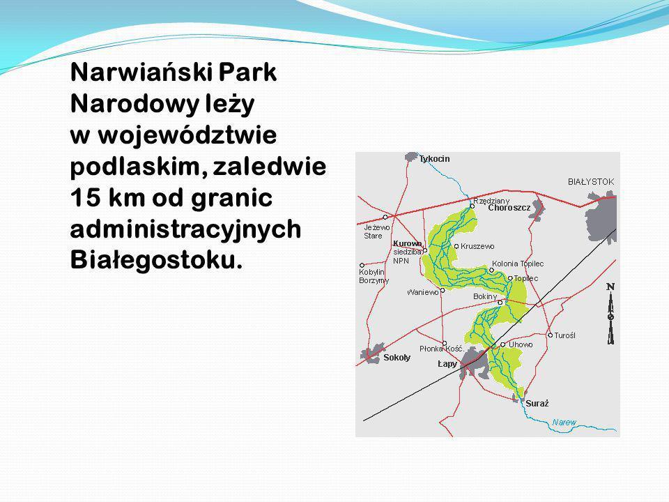 Narwia ń ski Park Narodowy le ż y w województwie p odlaskim, zaledwie 15 km od granic administracyjnych Bia ł egostoku.