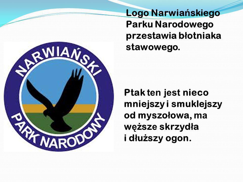 Logo Narwia ń skiego Parku Narodowego przestawia b ł otniaka stawowego. Ptak ten jest nieco mniejszy i smuklejszy od myszo ł owa, ma w ęż sz e skrzyd