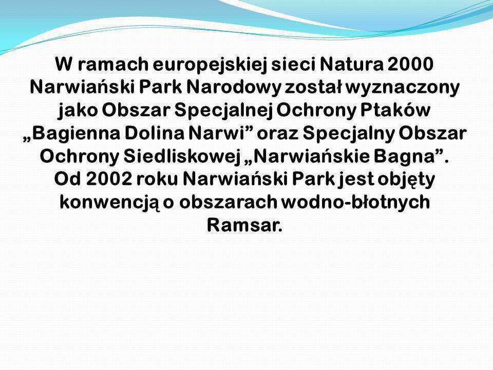 W ramach europejskiej sieci Natura 2000 Narwia ń ski Park Narodowy zosta ł wyznaczony jako Obszar Specjalnej Ochrony Ptaków Bagienna Dolina Narwi oraz