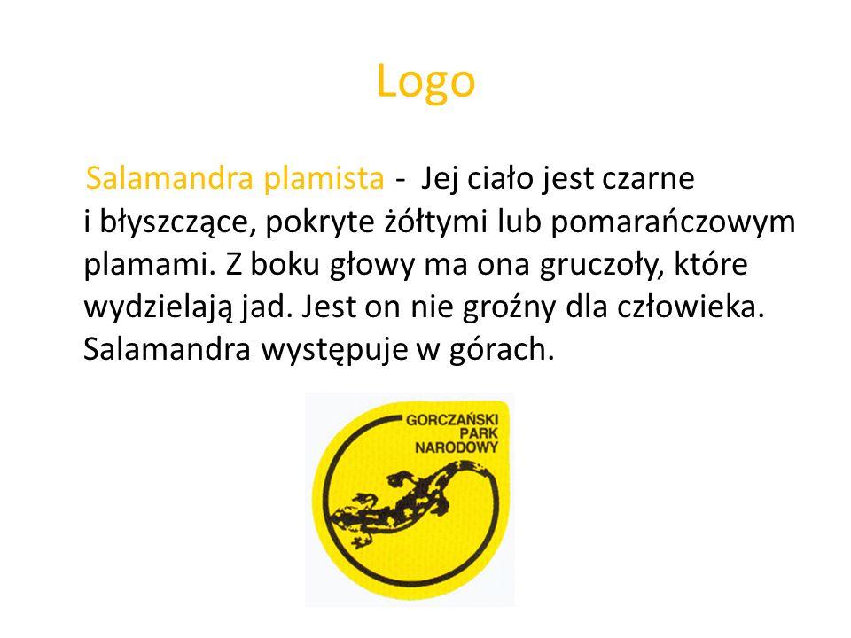 Logo Salamandra plamista - Jej ciało jest czarne i błyszczące, pokryte żółtymi lub pomarańczowym plamami. Z boku głowy ma ona gruczoły, które wydziela