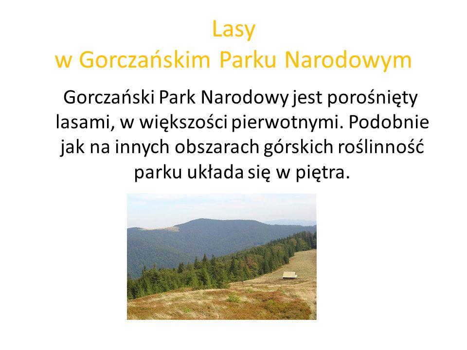 Lasy w Gorczańskim Parku Narodowym Gorczański Park Narodowy jest porośnięty lasami, w większości pierwotnymi. Podobnie jak na innych obszarach górskic