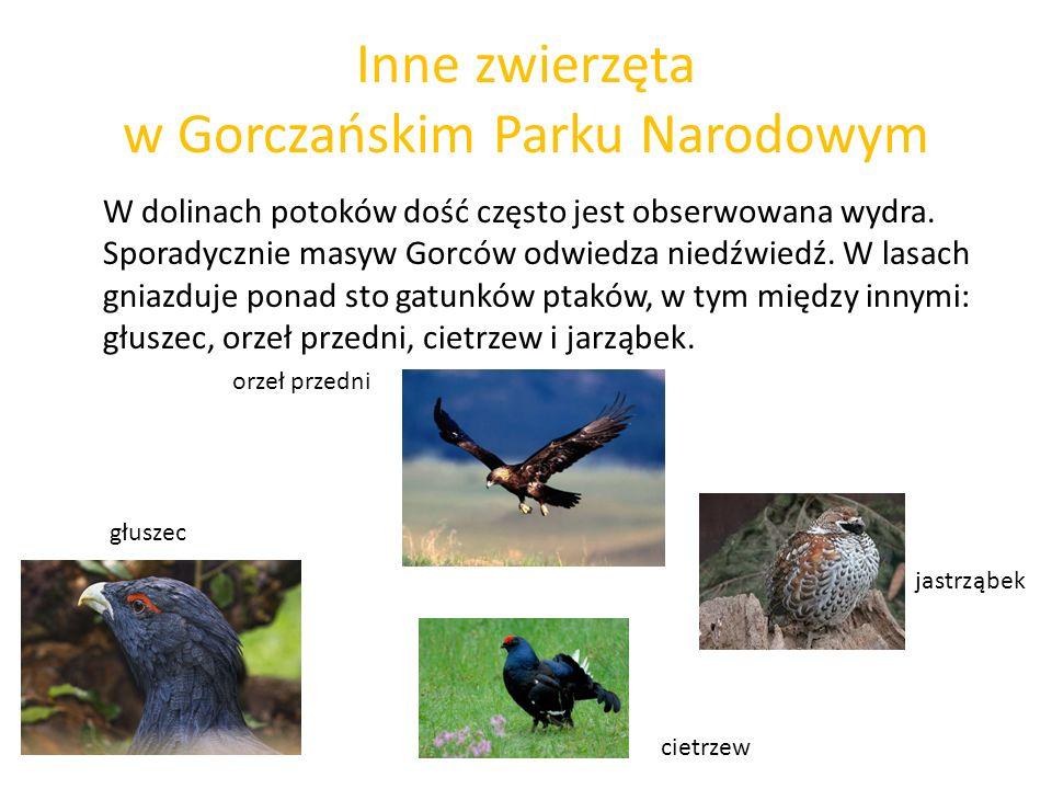 Inne zwierzęta w Gorczańskim Parku Narodowym W dolinach potoków dość często jest obserwowana wydra. Sporadycznie masyw Gorców odwiedza niedźwiedź. W l