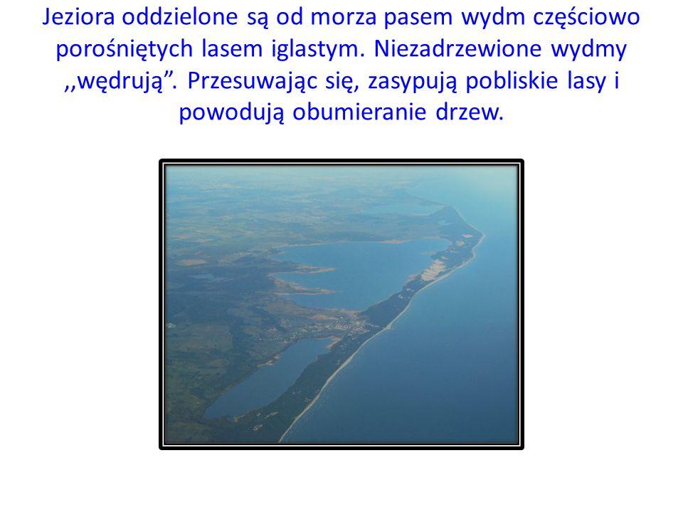 Jeziora oddzielone są od morza pasem wydm częściowo porośniętych lasem iglastym.