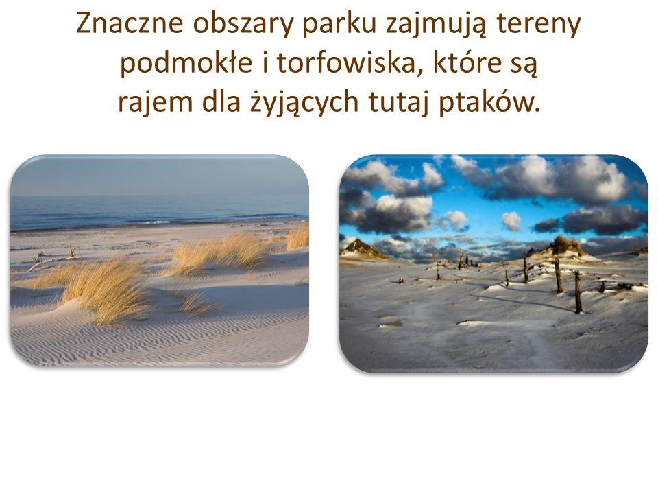 Słowiński Park Narodowy wraz z unikalnymi na skalę europejską – wydmami ruchomymi, bogatą florą i fauną oraz specyficznym leczniczym mikroklimatem został w 1977 roku włączony przez UNESCO do sieci Światowych Rezerwatów Biosfery.