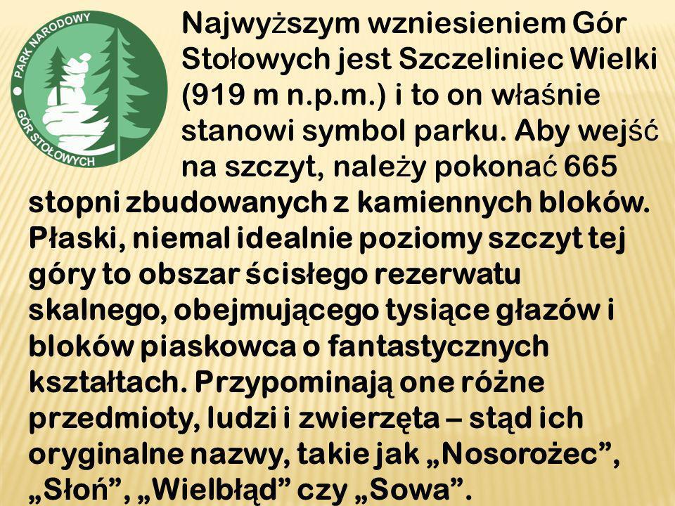Najwy ż szym wzniesieniem Gór Sto ł owych jest Szczeliniec Wielki (919 m n.p.m.) i to on w ł a ś nie stanowi symbol parku. Aby wej ść na szczyt, nale
