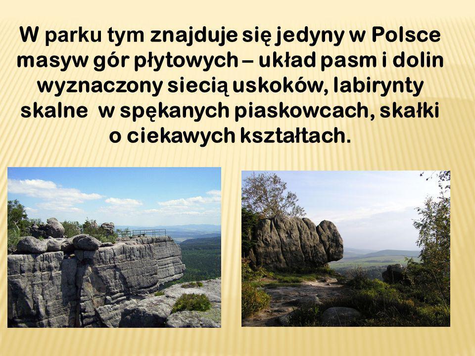 W parku tym znajduje si ę jedyny w Polsce masyw gór p ł ytowych – uk ł ad pasm i dolin wyznaczony sieci ą uskoków, labirynty skalne w sp ę kanych pias