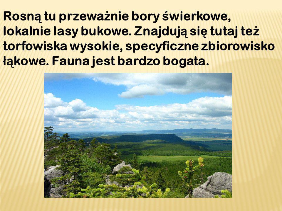 Bogactwem Gór Sto ł owych jest ro ś linno ść ska ł, łą k, torfowisk i lasów li ś ciastych.