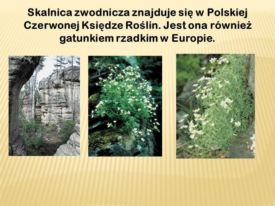 Skalnica zwodnicza znajduje si ę w Polskiej Czerwonej Ksi ę dze Ro ś lin. Jest ona równie ż gatunkiem rzadkim w Europie.