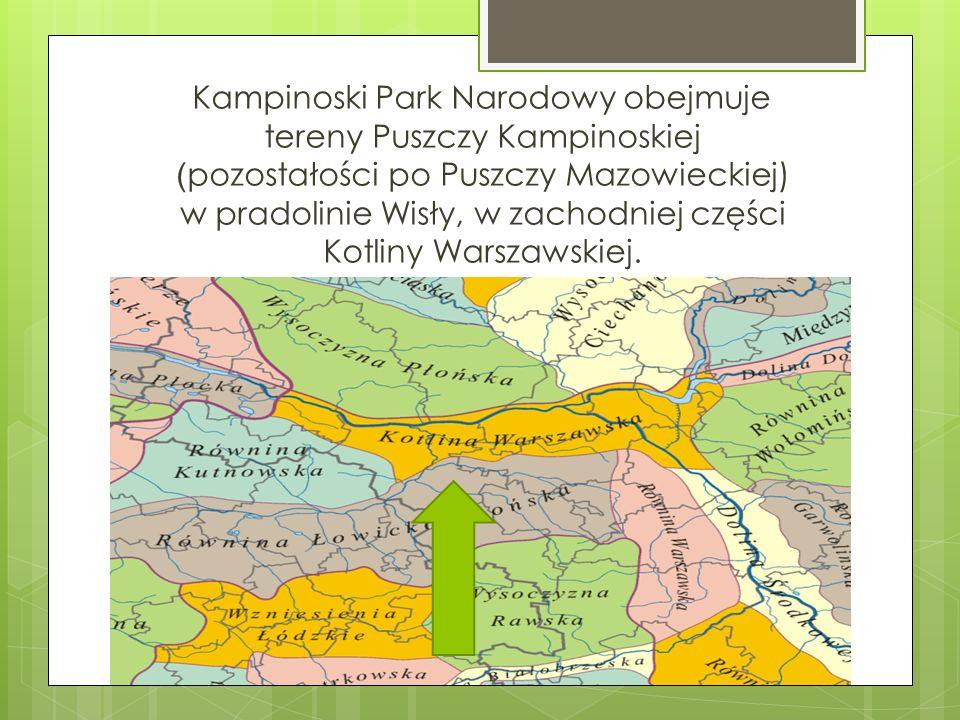 Kampinoski Park Narodowy obejmuje tereny Puszczy Kampinoskiej ( pozostałości po Puszczy Mazowieckiej) w pradolinie Wisły, w zachodniej części Kotliny