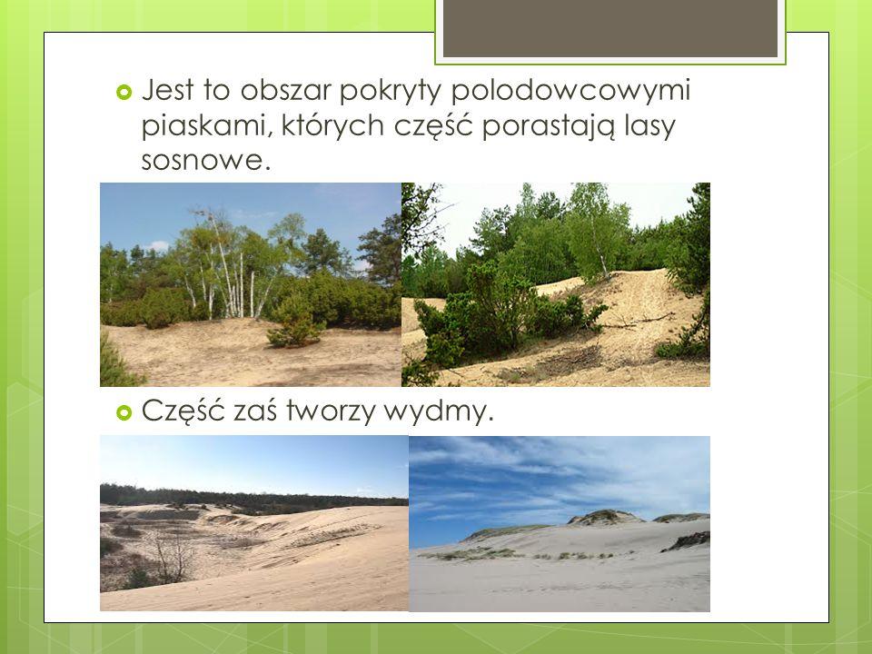 Jest to obszar pokryty polodowcowymi piaskami, których część porastają lasy sosnowe. Część zaś tworzy wydmy.