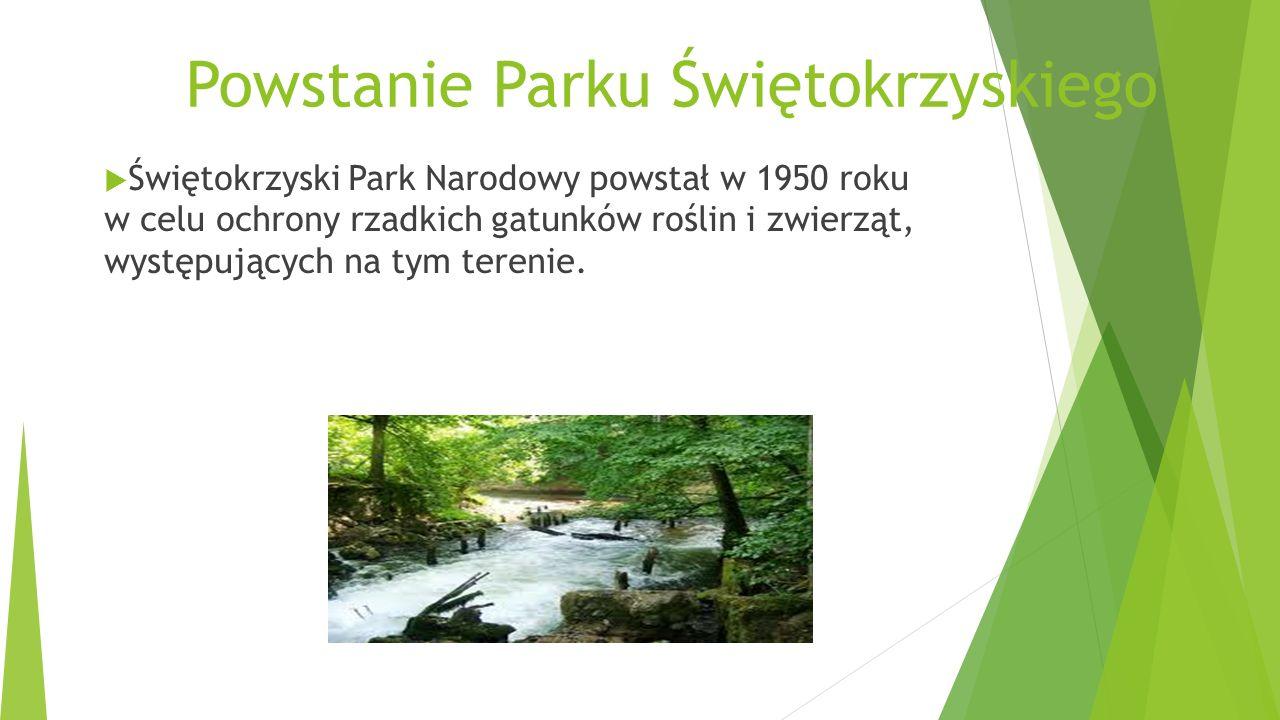 Powstanie Parku Świętokrzyskiego Świętokrzyski Park Narodowy powstał w 1950 roku w celu ochrony rzadkich gatunków roślin i zwierząt, występujących na