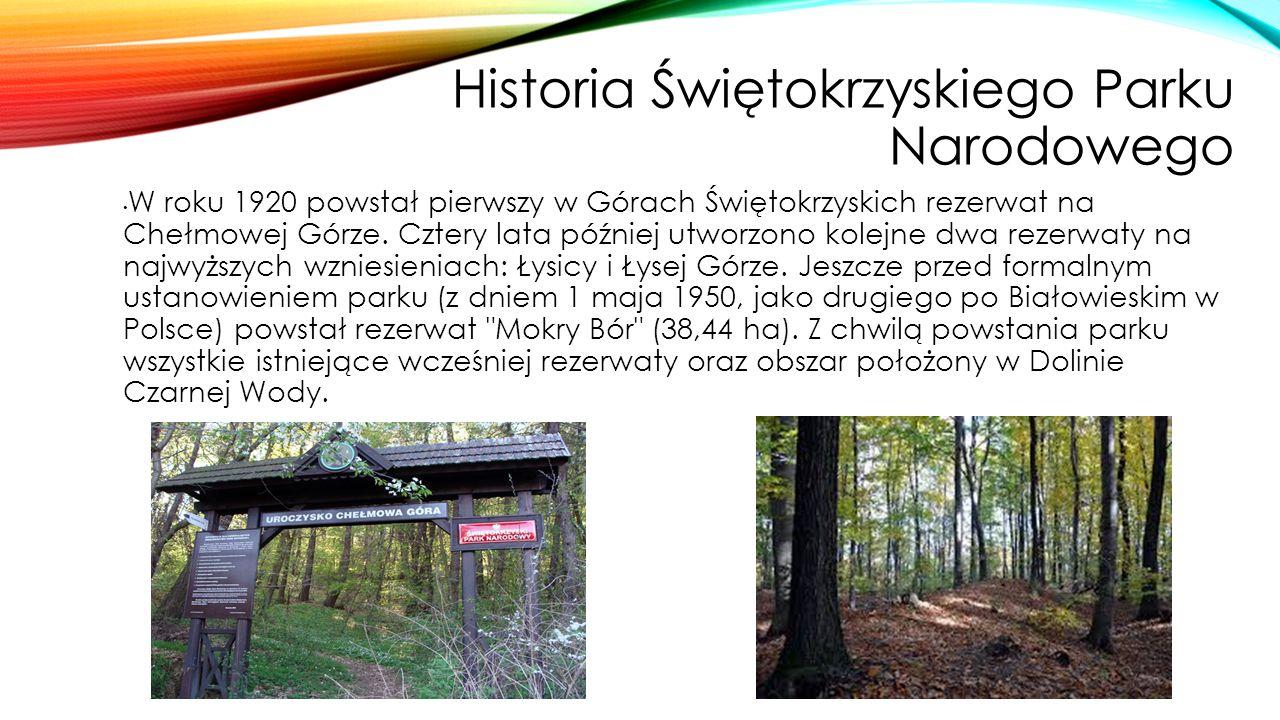 Historia Świętokrzyskiego Parku Narodowego W roku 1920 powstał pierwszy w Górach Świętokrzyskich rezerwat na Chełmowej Górze. Cztery lata później utwo
