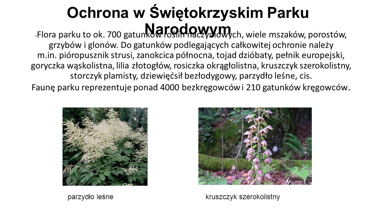 Ochrona w Świętokrzyskim Parku Narodowym Flora parku to ok. 700 gatunków roślin naczyniowych, wiele mszaków, porostów, grzybów i glonów. Do gatunków p