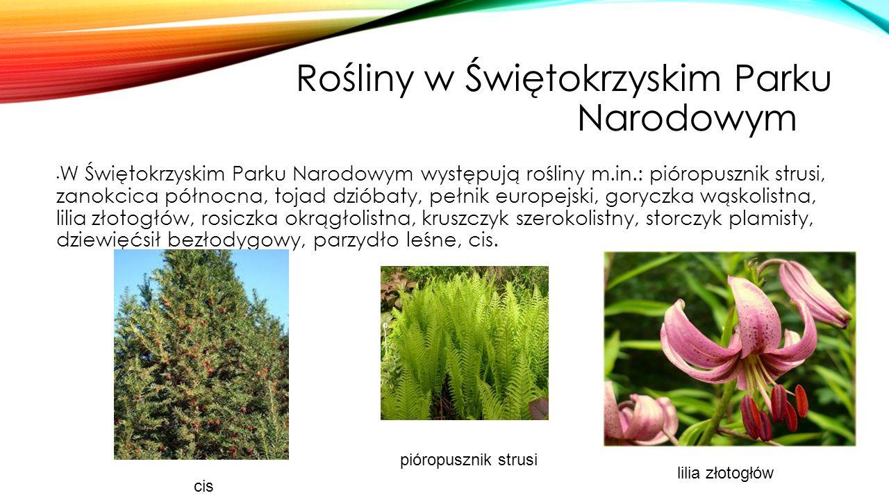 Rośliny w Świętokrzyskim Parku Narodowymm W Świętokrzyskim Parku Narodowym występują rośliny m.in.: pióropusznik strusi, zanokcica północna, tojad dzi