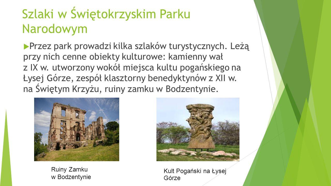 Szlaki w Świętokrzyskim Parku Narodowym Przez park prowadzi kilka szlaków turystycznych. Leżą przy nich cenne obiekty kulturowe: kamienny wał z IX w.