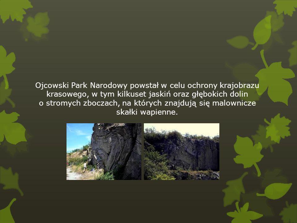 Ojcowski Park Narodowy powstał w celu ochrony krajobrazu krasowego, w tym kilkuset jaskiń oraz głębokich dolin o stromych zboczach, na których znajduj