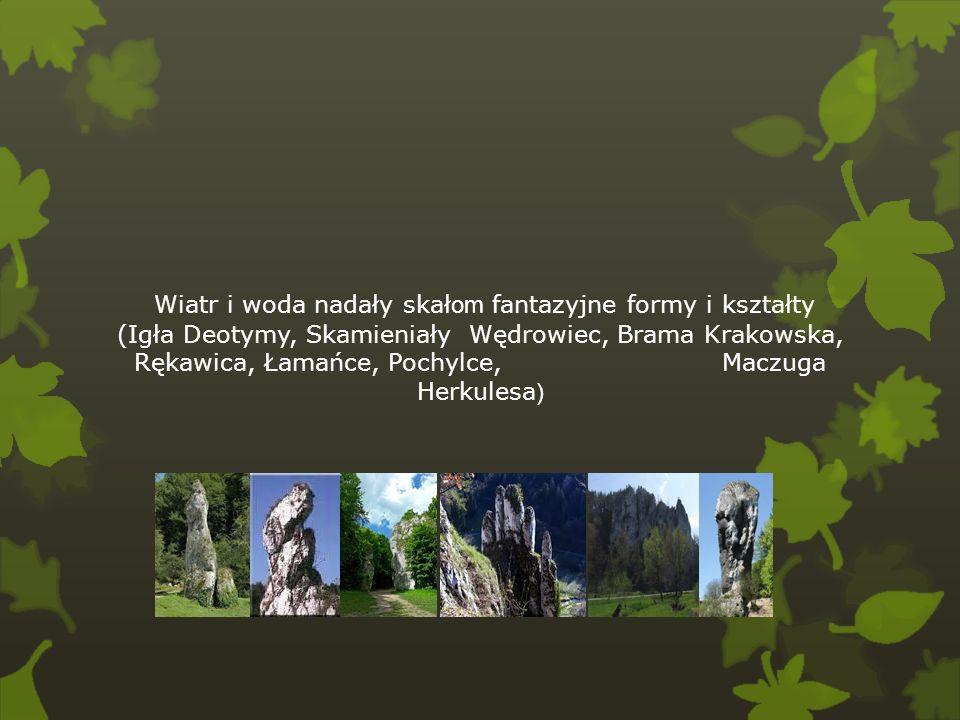 Wiatr i woda nadały skał om fantazyjne formy i kształty (Igła Deotymy, Skamieniały Wędrowiec, Brama Krakowska, Rękawica, Łamańce, Pochylce, Maczuga He