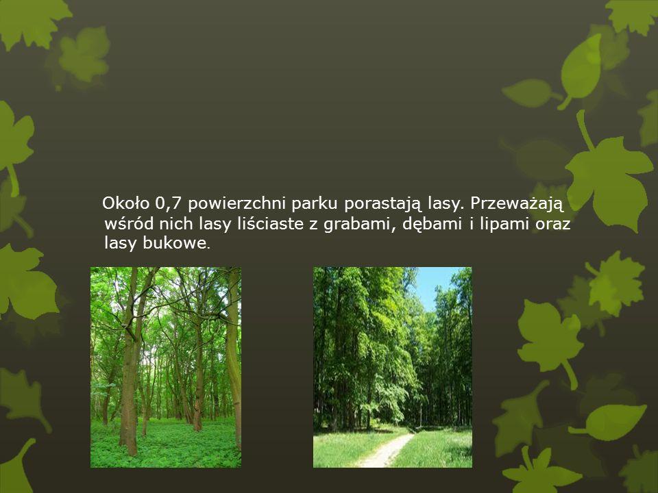 Około 0,7 powierzchni parku porastają lasy. Przeważają wśród nich lasy liściaste z grabami, dębami i lipami oraz lasy bukowe.