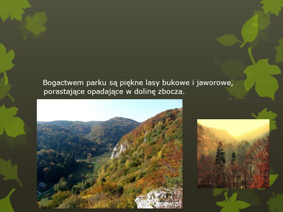 W parku występuje rzadko spotykana w Polsce roślinność nazywana suchoroślami, wytrzymała na wysoką temperaturę i okresowe niedobory wody.