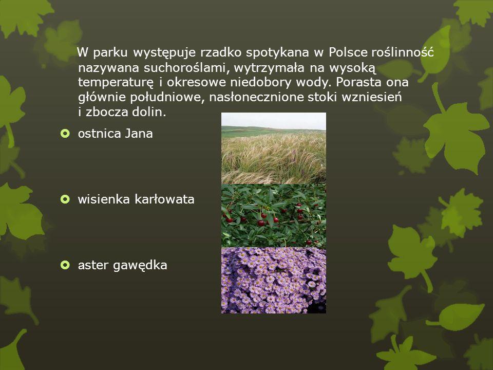 W parku występuje rzadko spotykana w Polsce roślinność nazywana suchoroślami, wytrzymała na wysoką temperaturę i okresowe niedobory wody. Porasta ona