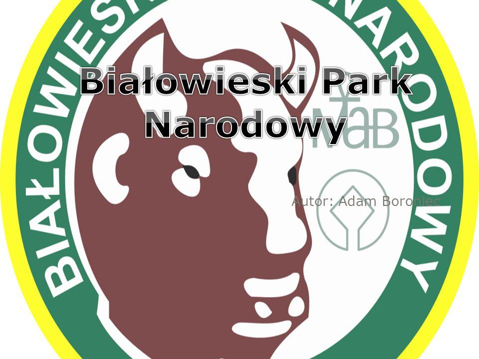 Położenie Białowieski Park Narodowy położony jest w północno-wschodniej części Polski, w województwie podlaskim.