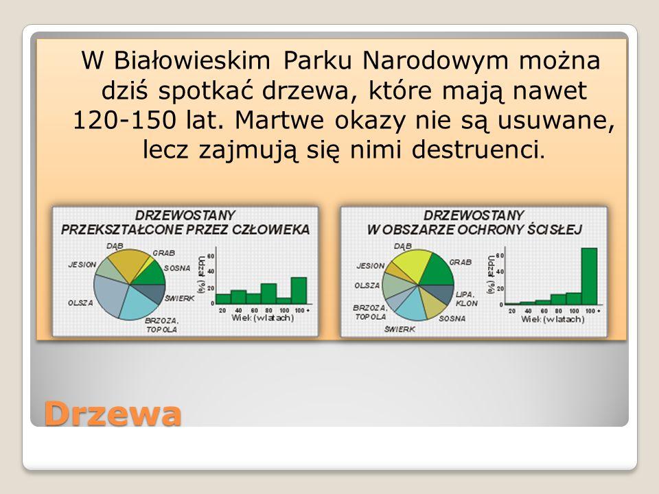 Fauna Białowieski Park Narodowy charakteryzuje się bogatą fauną.