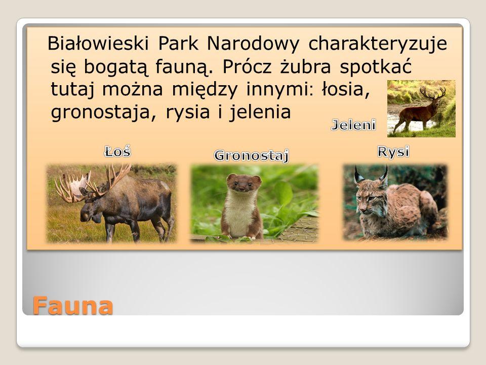 Osiągnięcia Rangę Białowieskiego Parku Narodowego podkreśla uznanie go przez UNESCO za Światowy Rezerwat Biosfery, wpisanie na listę Dziedzictwa Światowego, a w ostatnim czasie przyznanie Dyplomu Europy.