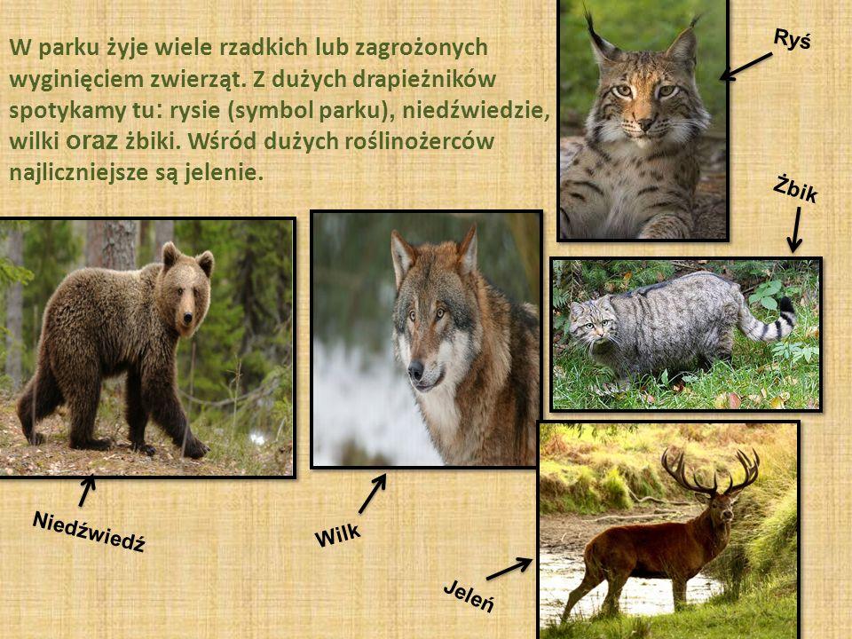 W parku żyje wiele rzadkich lub zagrożonych wyginięciem zwierząt.