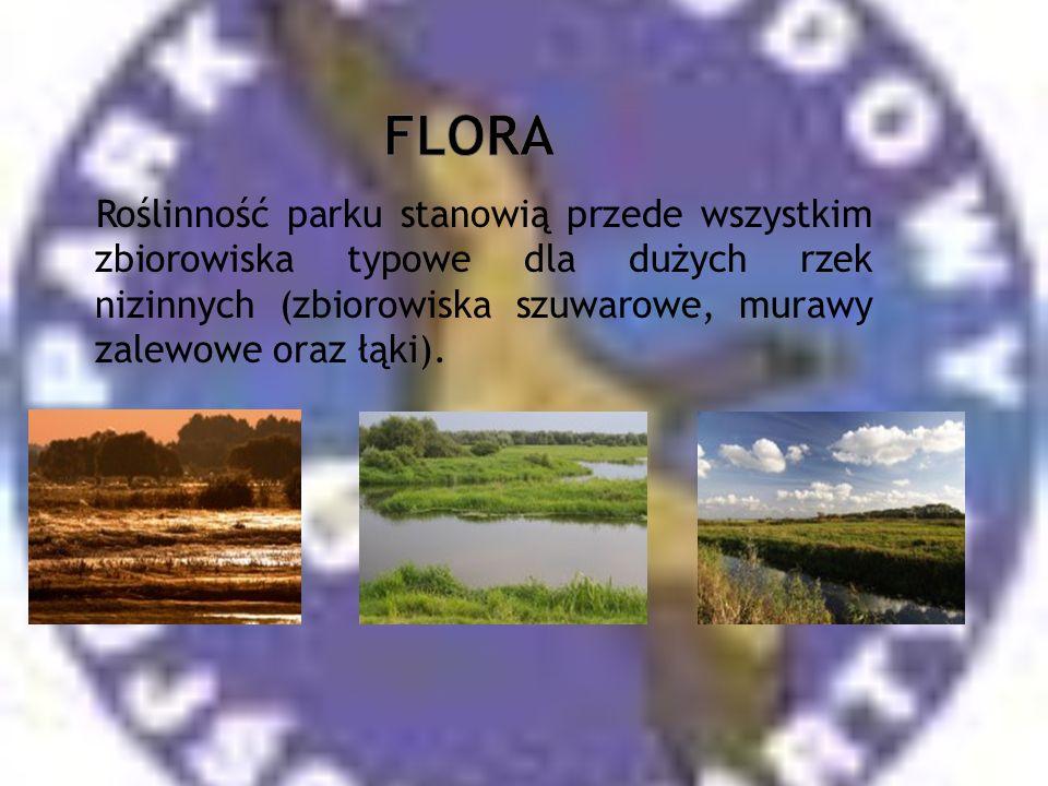 Roślinność parku stanowią przede wszystkim zbiorowiska typowe dla dużych rzek nizinnych (zbiorowiska szuwarowe, murawy zalewowe oraz łąki).