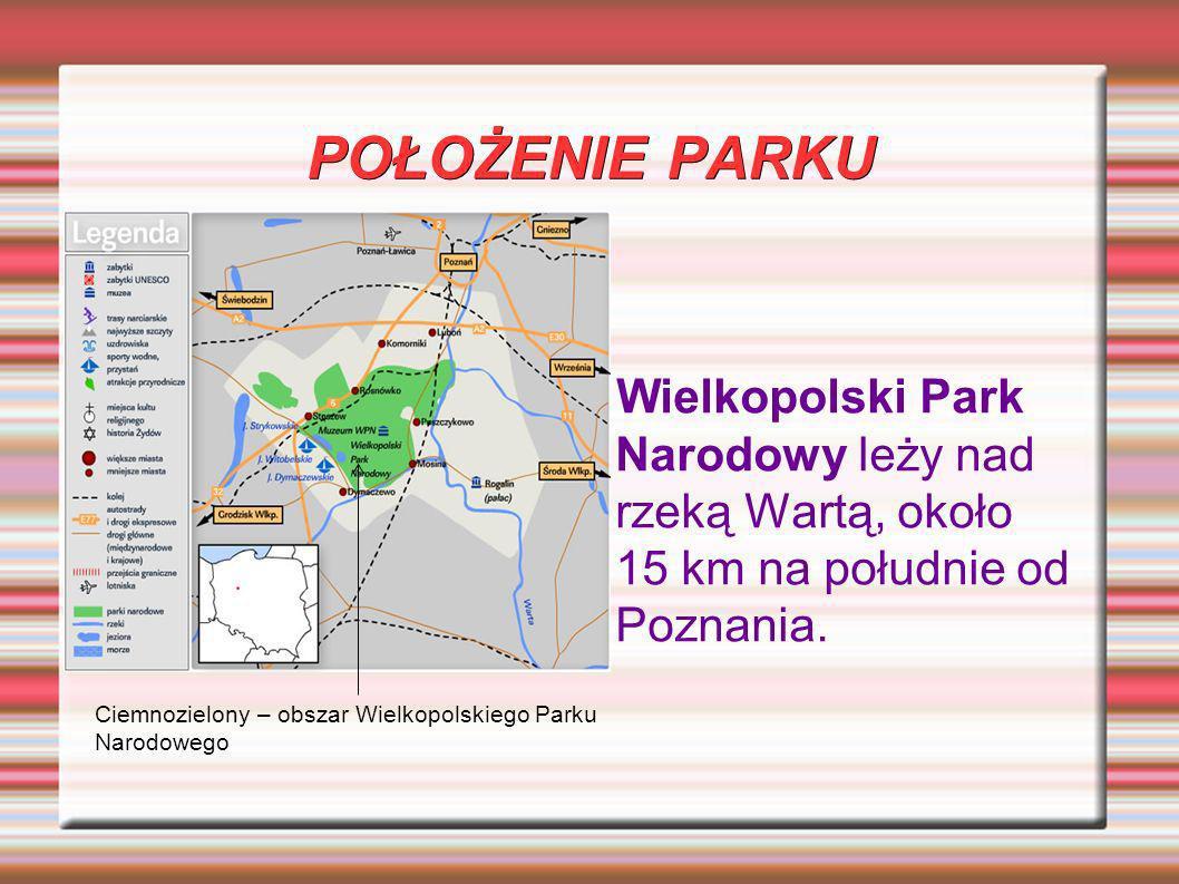 POŁOŻENIE PARKU Wielkopolski Park Narodowy leży nad rzeką Wartą, około 15 km na południe od Poznania. Ciemnozielony – obszar Wielkopolskiego Parku Nar
