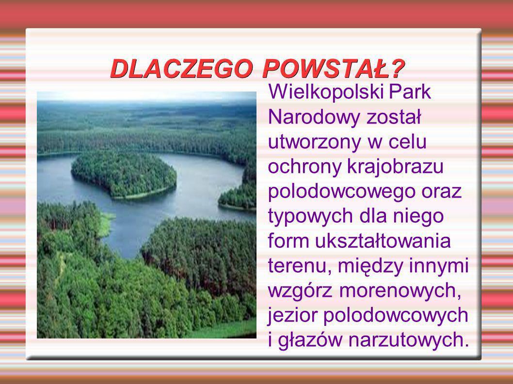 DLACZEGO POWSTAŁ? Wielkopolski Park Narodowy został utworzony w celu ochrony krajobrazu polodowcowego oraz typowych dla niego form ukształtowania tere
