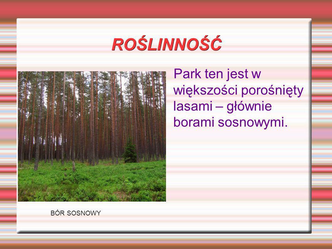 ROŚLINNOŚĆ Park ten jest w większości porośnięty lasami – głównie borami sosnowymi. BÓR SOSNOWY
