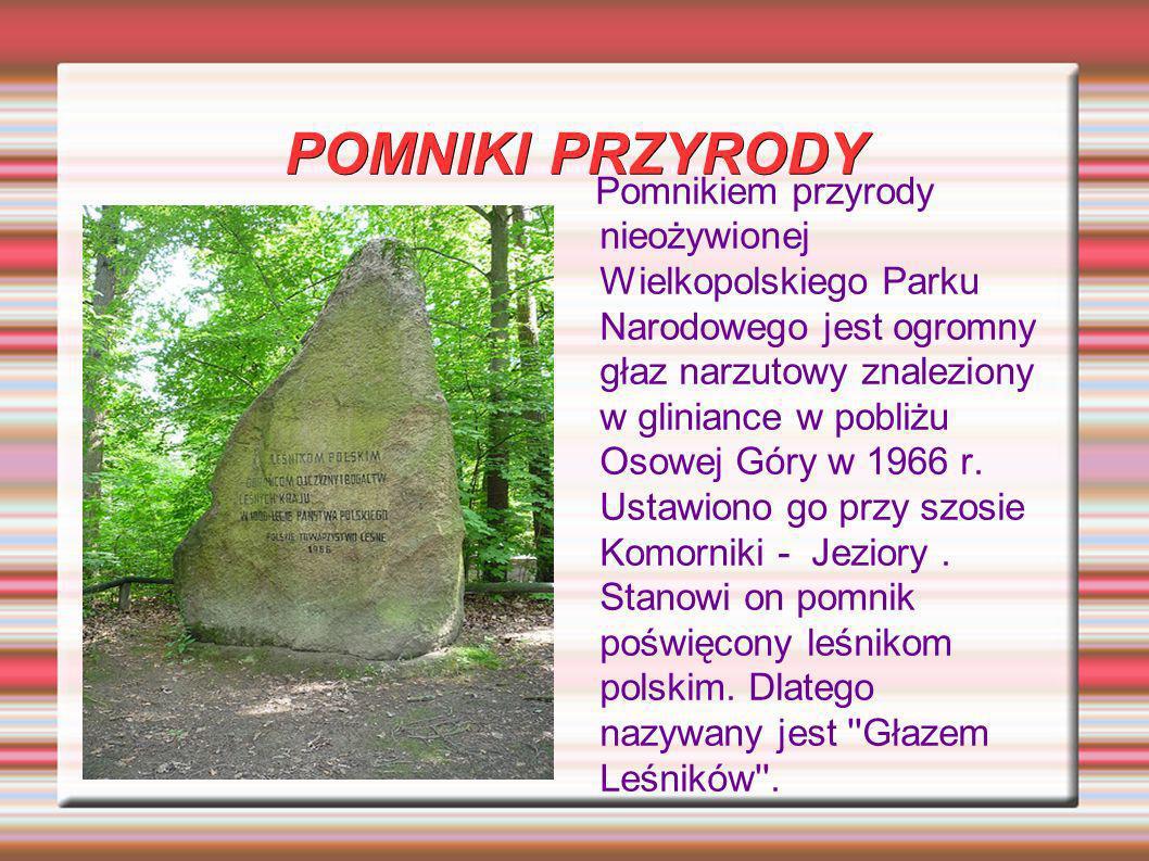 POMNIKI PRZYRODY Pomnikiem przyrody nieożywionej Wielkopolskiego Parku Narodowego jest ogromny głaz narzutowy znaleziony w gliniance w pobliżu Osowej