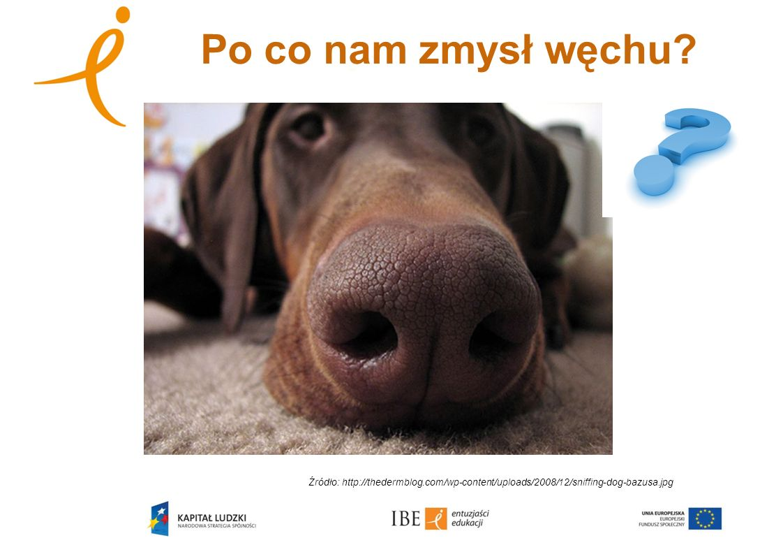Po co nam zmysł węchu? Źródło: http://thedermblog.com/wp-content/uploads/2008/12/sniffing-dog-bazusa.jpg