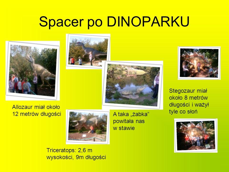 Spacer po DINOPARKU Stegozaur miał około 8 metrów długości i ważył tyle co słoń Allozaur miał około 12 metrów długości Triceratops: 2,6 m wysokości, 9