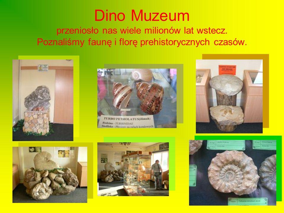 Dino Muzeum przeniosło nas wiele milionów lat wstecz. Poznaliśmy faunę i florę prehistorycznych czasów.